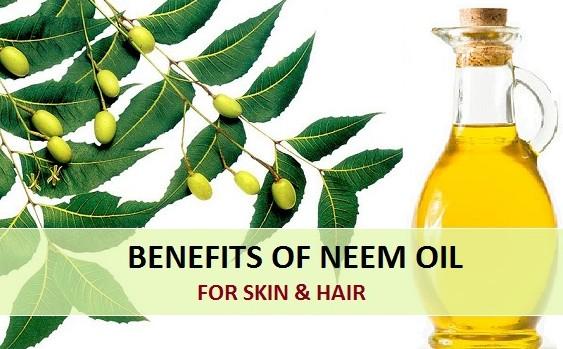 surprising benefits of neem oil on hair skin and its uses benefits of neem tree oil on hair