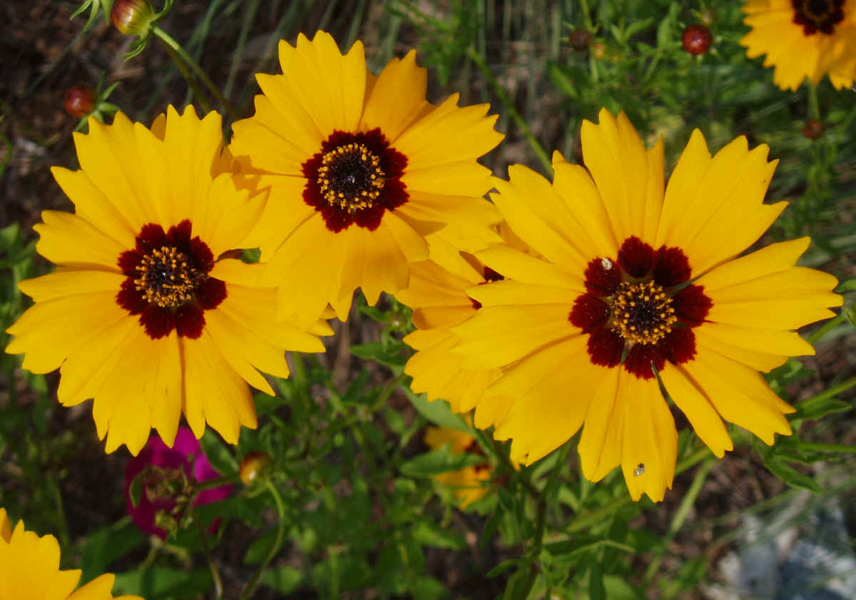 Top 30 Beautiful Yellow Flowers Names List With