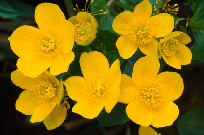 top ten beautiful yellow flowers