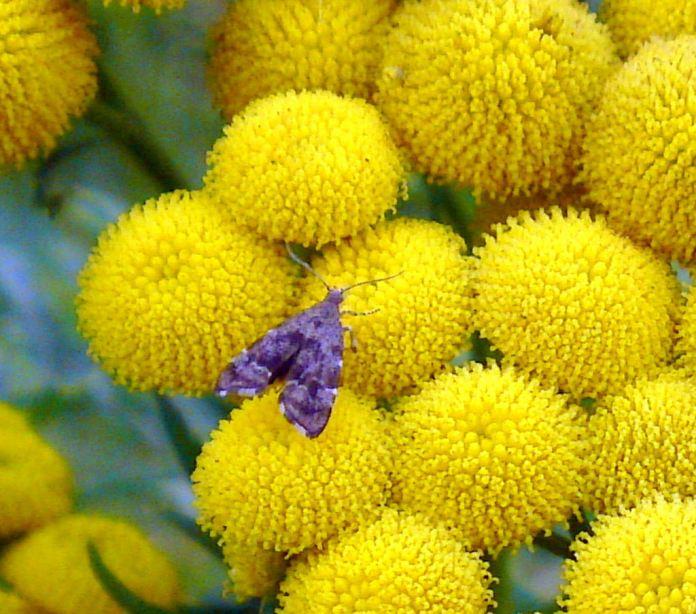 yellow flowrs photos