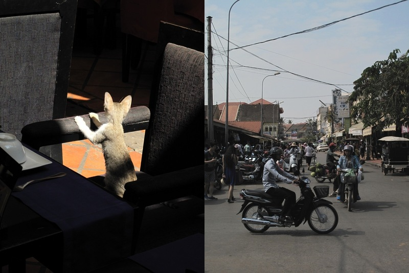 A cat and a street in Siem Reap