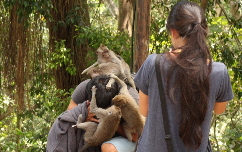 Monkey attack at Ubud Monkey Forest