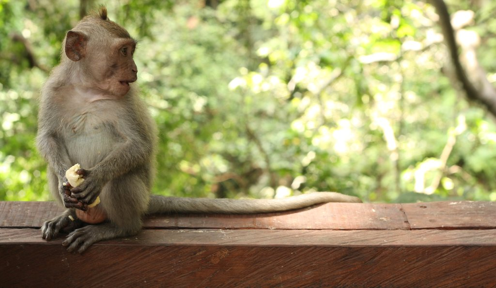 Baby monkey sitting on bench