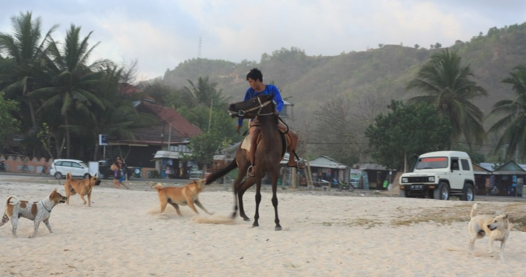 Dogs attacking horse