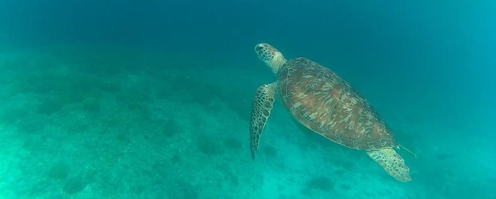 Gili Trawangan sea life