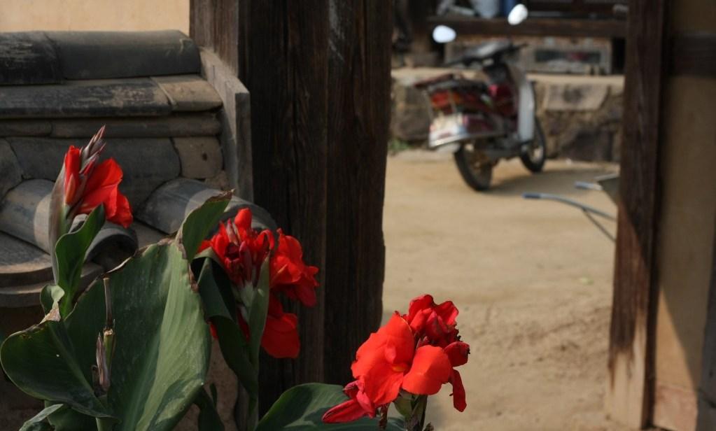 Flower in Hahoe Folk Village