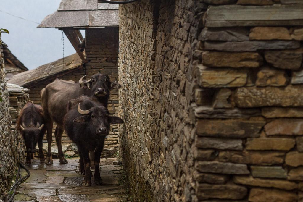 The streets of Ghandruk