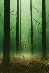 Forest Full Art