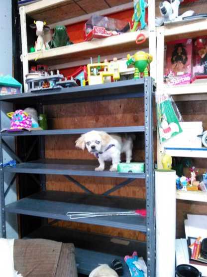 Cola on The Shelf 2