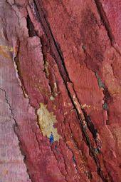 Wood texture, Marsala color trend