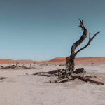 Why the Desert is Sometimes Exactly What We Need