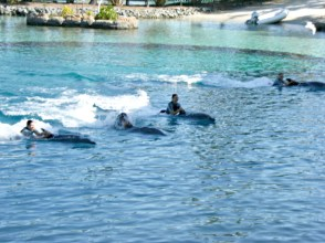 The Dolphins With their Trainers at Sea World