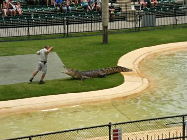 The Crocodile Show at the Australia Zoo