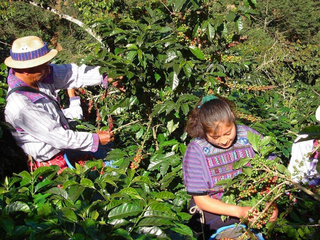 Farmer_friends_from-Guatemala_MiralValle_Young_Hustler_Coffee