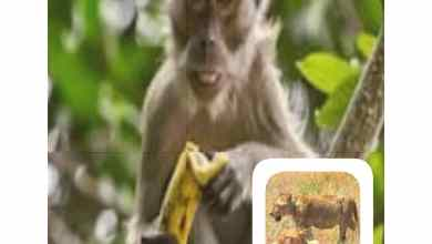 Photo of Monkey Must Come For Banana.