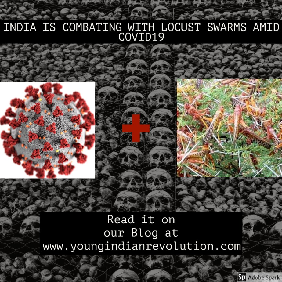 INDIA IS COMBATING WITH LOCUST SWARMS AMID COVID19