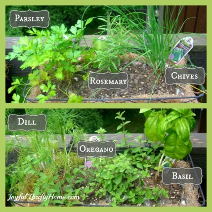 My Favorite Herbs
