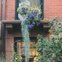 0_2795_684_3222_three_nyc-window-sill-flower-jr040