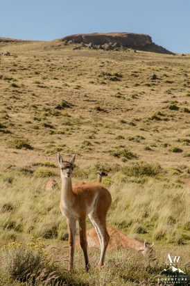 Patagonia Wedding Photographer-Torres Del Paine-Your Adventure Wedding-7