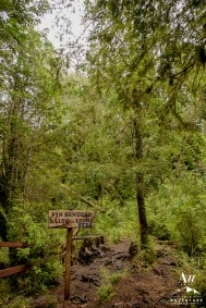 Wedding in Patagonia Rainforest - Your Adventure Wedding Patagonia