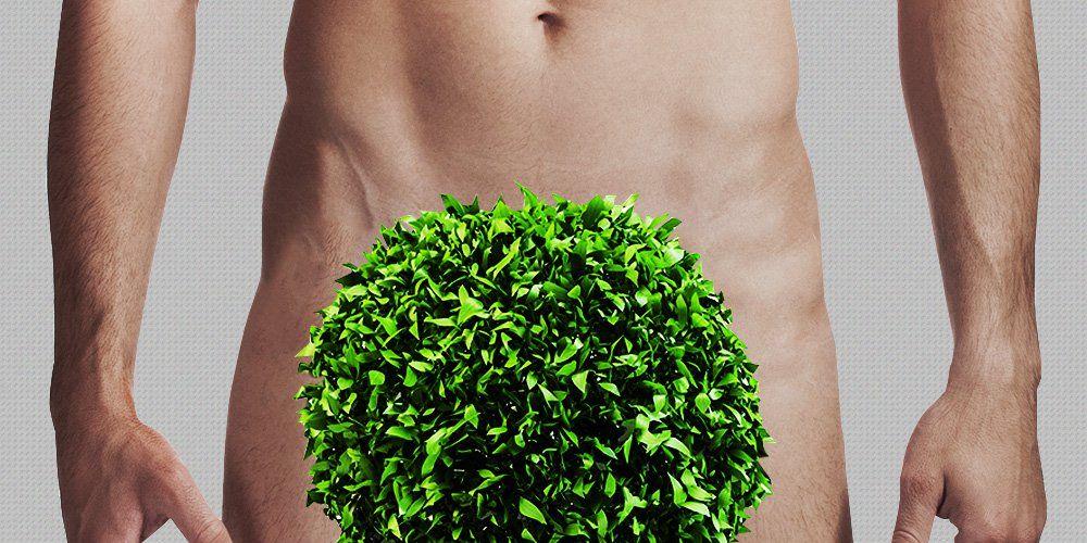 man's pubic hair bush