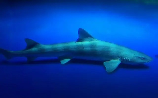 波動コミュニケーション サメ