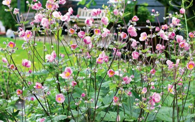 NOW'S THE TIME TO PLANT THESE PRETTY PERENNIALS Pre