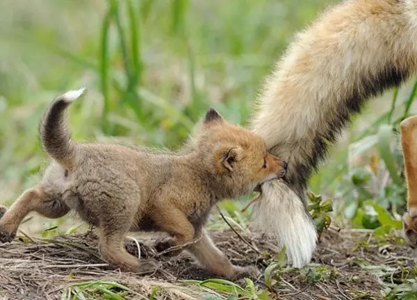 baby-animals-24