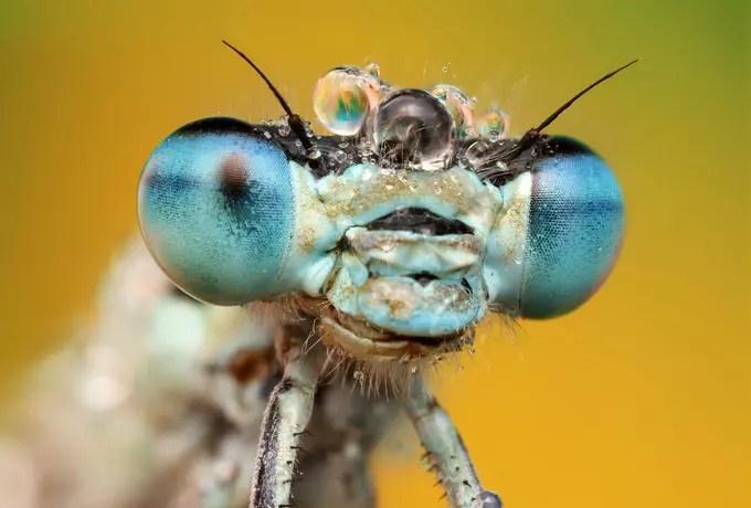 Blue eye by Ondrej Pakan - Downloaded from 500px_jpg
