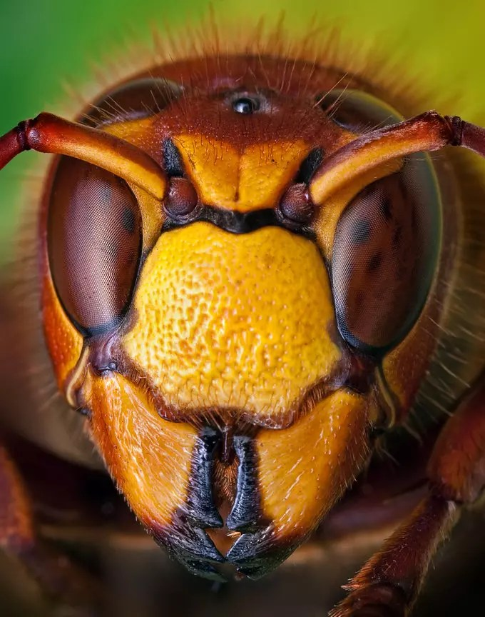 yellow jacket by Ondrej Pakan - Downloaded from 500px_jpg