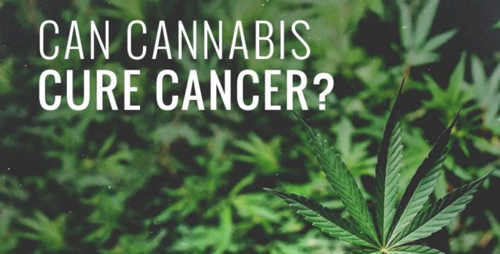 cancer cure with cbd oil