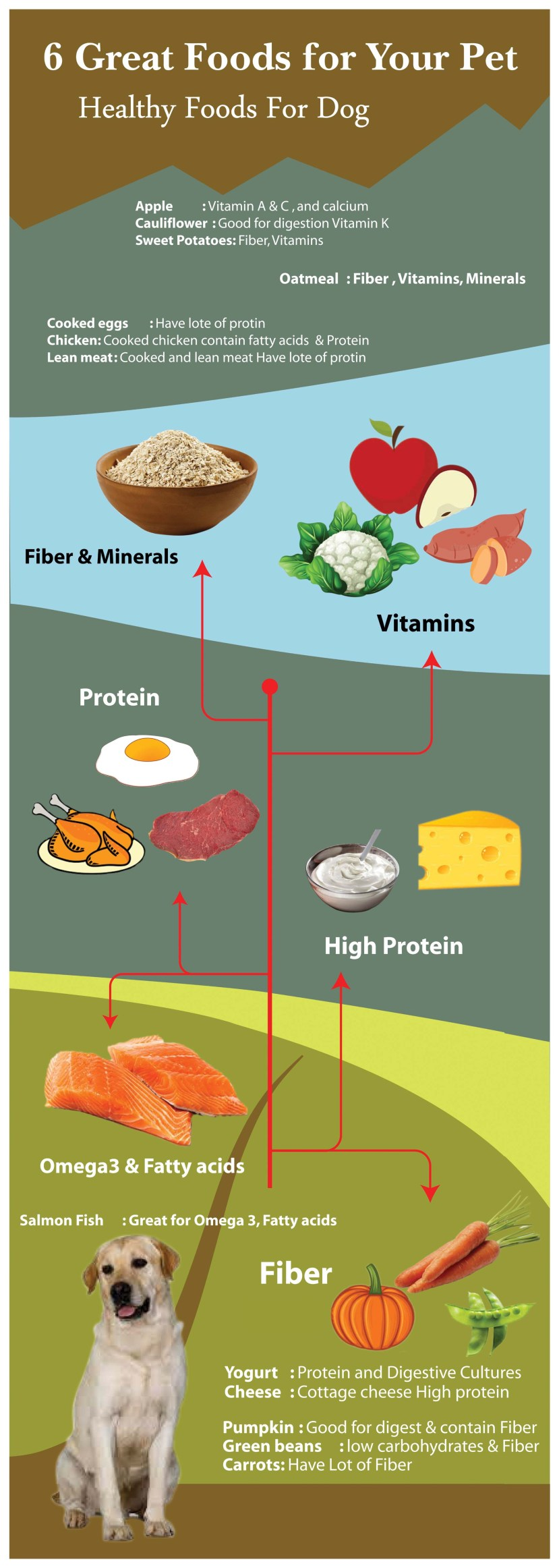 Healthy foods for German Shepherd Puppy Infograph.