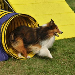 Dog Sports / Agility