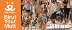 Join us for Best Friends Strut Your Mutt. Photo of lots of people walking lots of cute dogs.