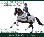 Hilltop-banner_USDF-Your-Dressage_300x250-Feb2020_Glamourdale
