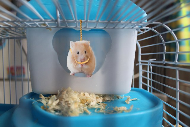 North West's Pet Hamster Kills Itself After Being Stuck With Kim Kardashian for Two Hours