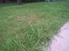 grass-i