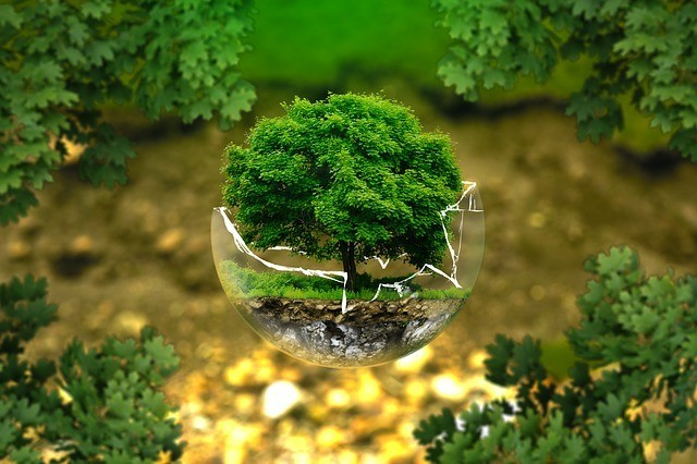 tree growing in a globe