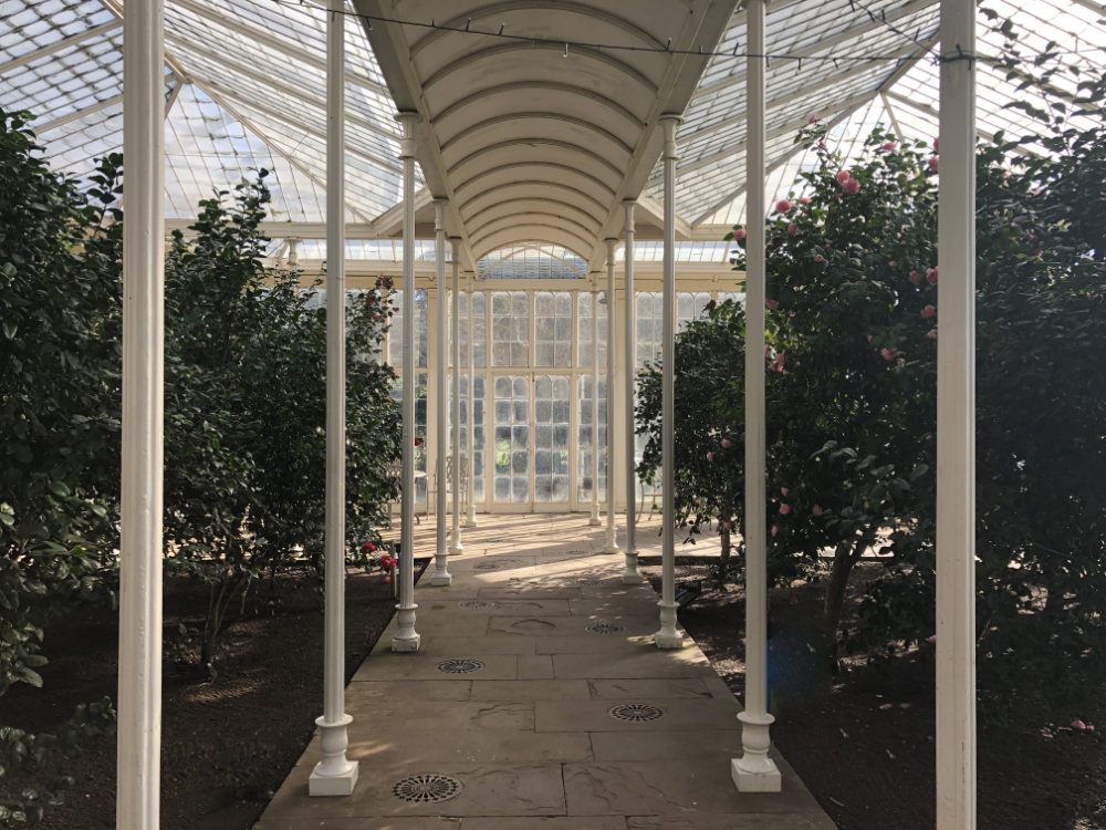 Inside the Camellia House at Wollaton Hall