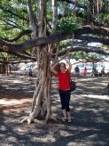 The Mom under the Banyan Tree! She used to climb it as a kiddo.