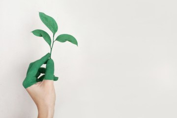 Canva Persons Left Hand Holding Green Leaf Plant - sustainable investor
