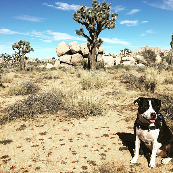 Nick Rufca's dog Duke in the desert - Happier Place