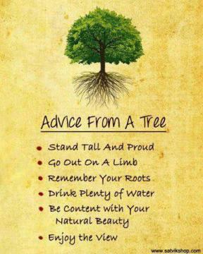 tree advice