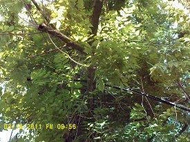ligne électrique en bois