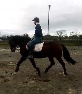 Sold Hunter, ridingschool, eventing…….(Sold)