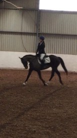 Tina doing well iat dressage