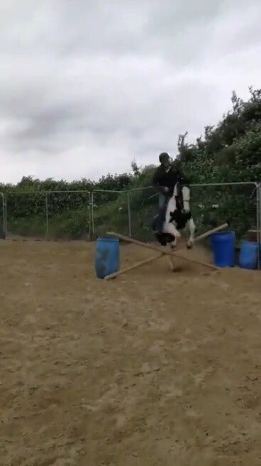 Foxhall Diggit a piebald pony jumping a fence
