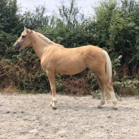 What horse is right for me?