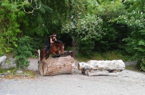 Bay pony jumping a big log
