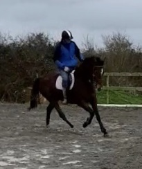Dark bay horse Barnaboy Eamon showing off his canter.
